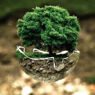 Une arbre qui pousse dans une demi-boule de verre
